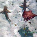 Penangkaran Ikan Hiu di Nusa Resto Pulau Pramuka